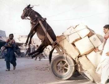 funny donkey business